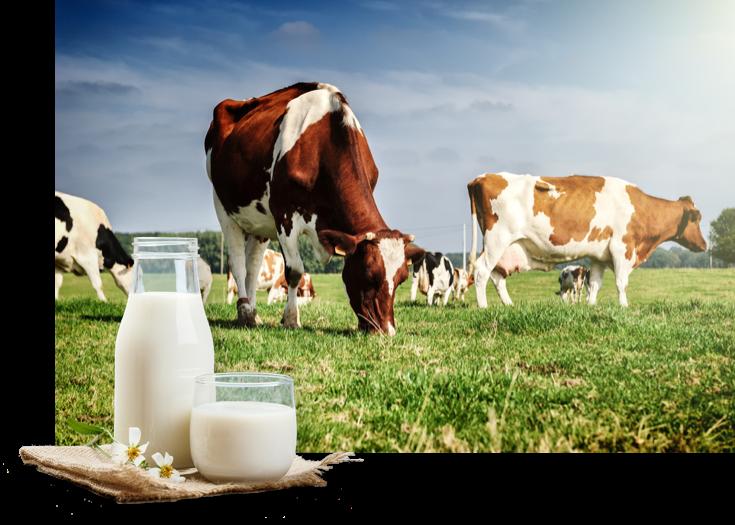 BIO-Milchprodukte mit echtem Geschmack